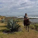 Paradise Riding - Horseback Tours