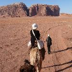 balade en chameau dans le wadi rum