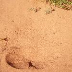Non è difficile incontrare le tracce di un serpente