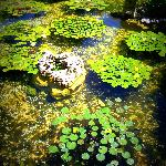 Isamu Taniguchi Japanese Garden
