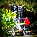 Waterfall in the Hartman Prehistoric Garden