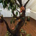 chocomuseo arbol de cacao