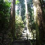 奥ノ院までは木々に囲まれた石段