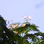 この夏赤門脇に咲いた花