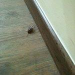 cockroach #1