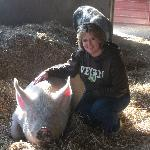One of the Wonderful Pigs