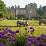 Rhinos in front of the Manor House