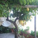 terrazza con limoni e amache