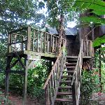 Stairs to the tree house