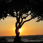 Sunset at Beach Tree