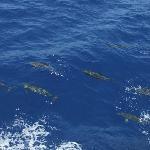 Les dauphins de Port Ghalib