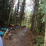 Mush camp