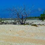 A la découverte des motu de sable rose.