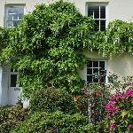 The wisteria in flower at the front door