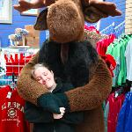 Large stuffed moose and polar bears make great photos