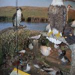 One of the many displays in the newer Birds of North Dakota exhibit.