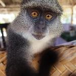 The monkey Tinga-Tinga lives in White Villa