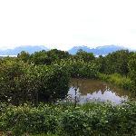 Nature Pond