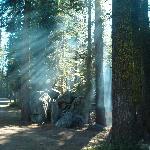 Foto Crane Flat Campground