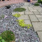 Catnap Garden