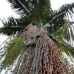 palm tree at  the garden