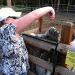 Feeding Jake & Jenny the donkeys