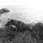 """Le pusimos """"Cometín"""". Este perro de Mazunte nos acompañó desde que subimos a Punta Cometa y nos"""