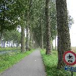 Tree lined bike path