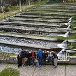 Criadero de Truchas de Ingenio -  Concepción