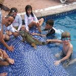 There's an Iguana in the Pool!