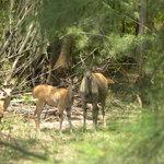 Bamburi Nature Trail