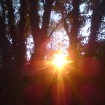 Sunset through the trees next to our tent