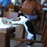 Los gatos ayudando a lavar los platos