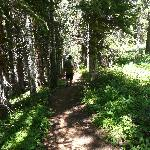 nice path through the woods
