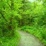 Less than 2kms from Ballyseedy Wood