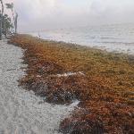 Seaweed problem