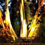 100 year old tree msin garden