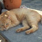 un des chats de l'Hotel, mon copain