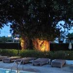 l arbre centenaire depuis ala piscine