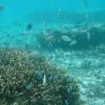 珊瑚に群れる熱帯魚