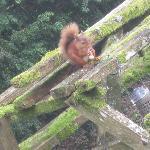 The red sqiurrel