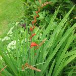Gardenflowers