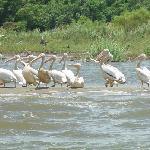 Aves en Laguna Los Micos