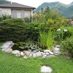 Isabelle: giardino, vasca ninfee