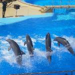 Marine land dolphin show