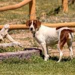 Jesse resident dog