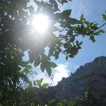 Sun through a lemon tree