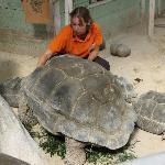 repas des tortues