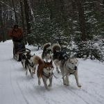 How many chances do you ever have to drive a sled team? Great time!