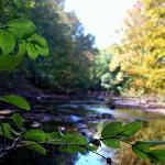 The kaaterskill Creek
